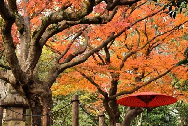 しっぽり飲むのも悪くない!鎌倉でおすすめのクラフトビールが飲めるパブを紹介